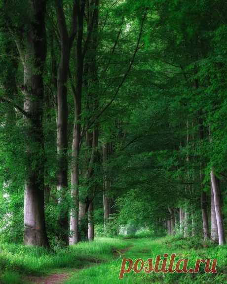 Зелёное царство ...