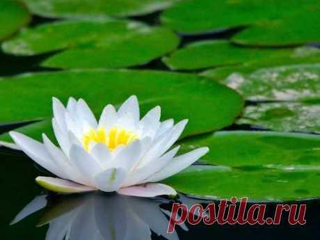 Какой цветок соответствует вашему имени: определяем растение-талисман