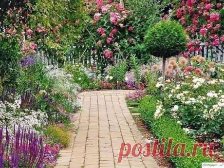 Где и какие цветы лучше сажать? — Садоводка
