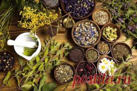 Список трав с мощным антивирусным эффектом / Будьте здоровы