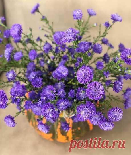 (1) Магия Цветов | Facebook