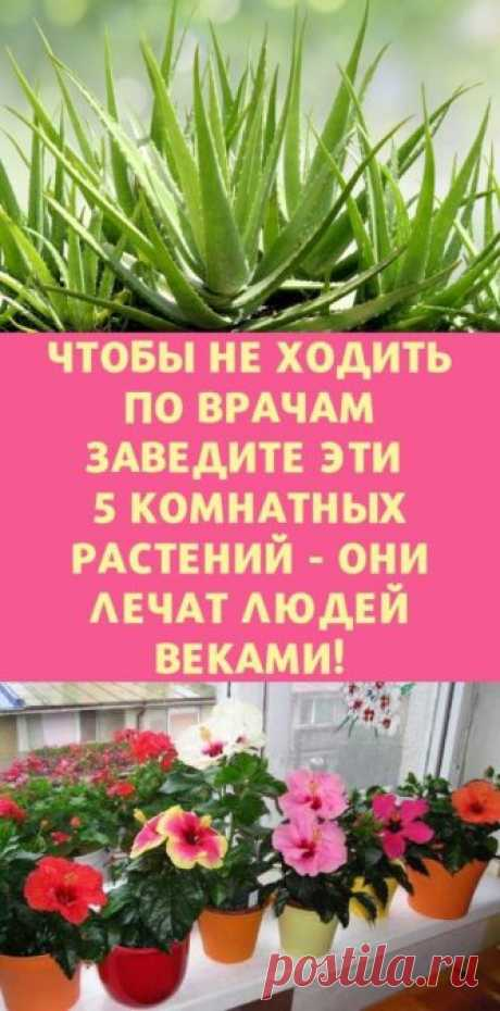 Чтобы не ходить по врачам заведите эти 5 комнатных растений - они лечат людей веками! - be1issimo.ru