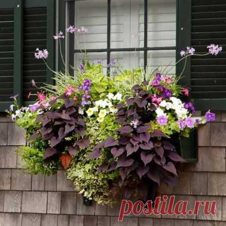 Красивые мини-клумбы под окнами для любителей живых цветов / Домоседы