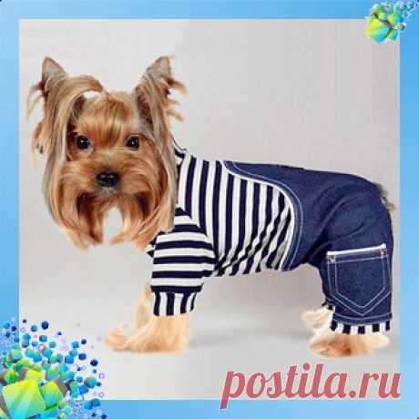 комбинезон для собачки - modapess -модная собачка
