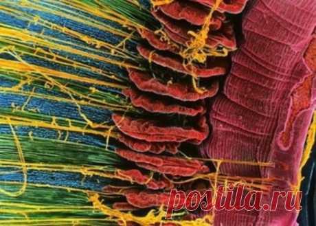Познай себя: 23 захватывающих фото человеческих органов под микроскопом! Даже представить себе сложно, что тело человека может выглядеть так... Впервые увидев на страницах школьного учебника по анатомии, из каких органов состоит тело человека, каждый из нас сделал для себя маленькое или большое открытие...