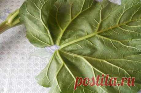 Куда с пользой пристроить листья ревеня? Делюсь своими идеями их применения в быту и огороде | садоёж | Яндекс Дзен