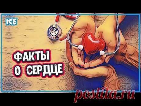 ИНТЕРЕСНЫЕ ФАКТЫ О СЕРДЦЕ ЧЕЛОВЕКА - Какое Сердце у Человека (работа сердце) - YouTube