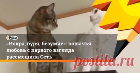 «Искра, буря, безумие»: кошачья любовь спервого взгляда рассмешила Сеть По-настоящему эпичным видео сделала композиция из«Титаника».
