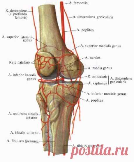 «Российские способы лечения болей в суставах вызывают лишь недоумение». Известный германский ревматолог дал откровенное интервью российскому телеканалу