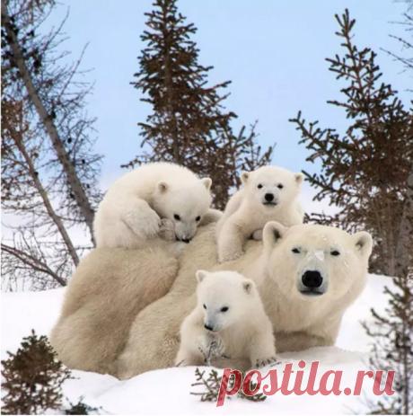 20 семейных фотографий, которые сломают все ваши стереотипы о мире животных