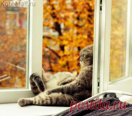 Осень, я с тобой!