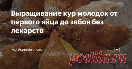 Выращивание кур молодок от первого яйца до забоя без лекарств автор канала  Вячеслав Воронов куры летом в выгуле Куры будут здоровы, если в курятнике будет следующее: ЧТО ДОЛЖНО БЫТЬ В КУРЯТНИКЕ