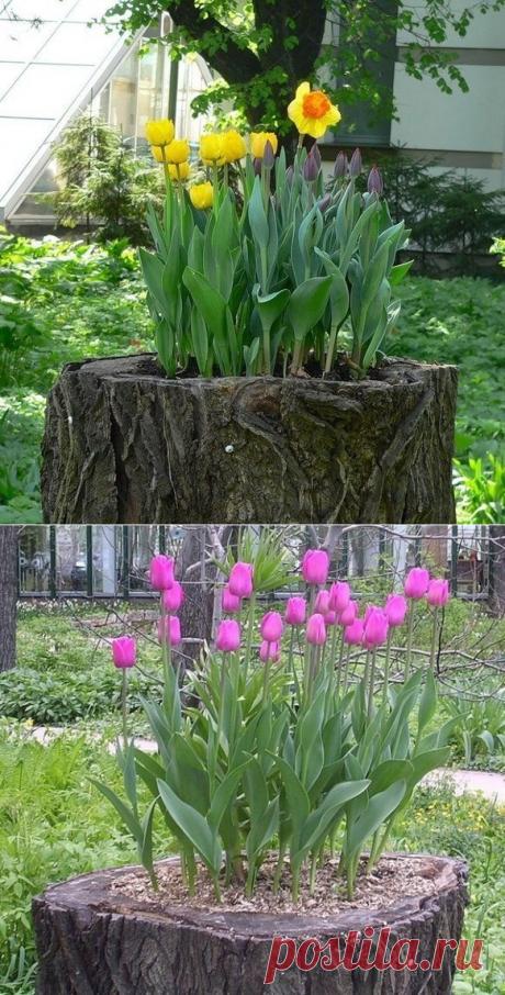 Креативный способ высадки тюльпанов на даче