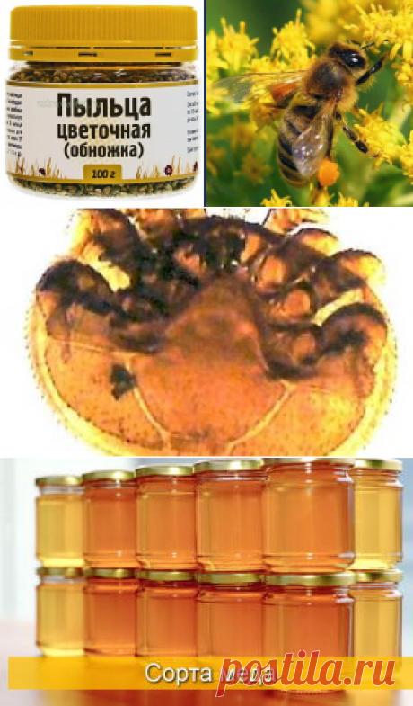 Что лечит пчелиная пыльца - полезные свойства