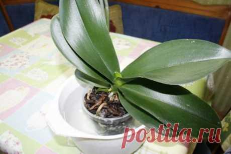 Орхидея не цветет! Болезни листьев и корней орхидей: фото, лечение заболеваний комнатных цветов и профилактические мероприятия