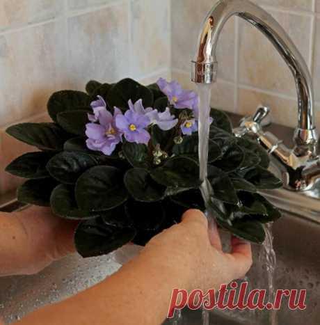 Как мыть листья комнатных цветов до блеска правильно? | Идеи для дома и окружения | Яндекс Дзен
