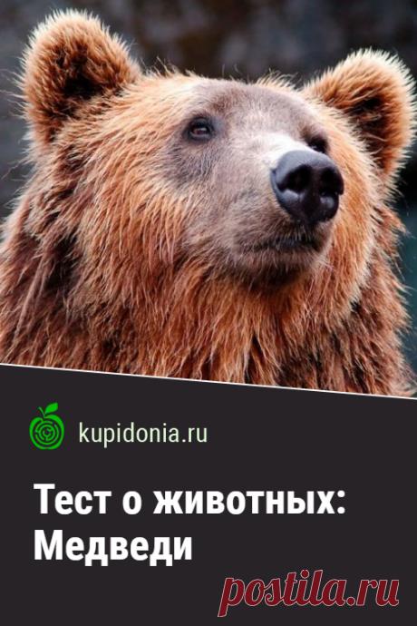 Тест о животных: Медведи. Хорошо ли вы знаете медведей? Пройдите наш тест и проверьте свои знания.