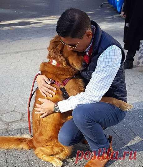 El perro, que obsequia a las transeúntes por los abrazos Si a usted tristemente y a solas, poezzhayte a Nueva York. Allí sobre una de las calles de la región Chelsea pasea el favorito de todo el mundo — el retriever dorado por el apodo de Lubuten.