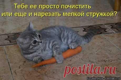 Пятничная котоматрица - ФОТО.