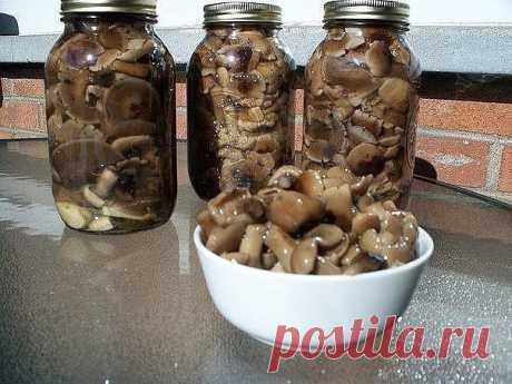 11 заготовок грибов на зиму Активное время готовки 25 мин. время на засолку  1. Засолка грибов - холодный способ.  грибы (рыжики, черные и белые грузди, волнушки, сыроежки) - 1 кг соль - 100 г смородина - 10–12 листьев вишня - 5–6 листиков хрен - 2 листа укроп - 2 зонтика лавровый лист - 2–3 шт. перец горошком - по вкусу чеснок - по вкусу  Грузди, волнушки или сыроежки вымыть и залить холодной водой на 5–6 ч. (Рыжики не вымачивают, а только промывают). На дно деревянной и...