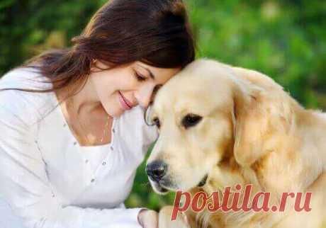 Породистая собака или дворовая собака: ваш выбор?