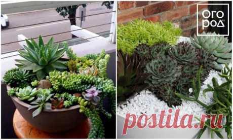 Какие цветы посадить на балконе – список названий с фотоидеями | Идеи дизайна (Огород.ru)