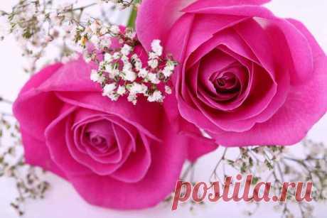 """Письмо «сообщение Классные_фоны : Схема """"Прекрасные розы"""" (20:39 31-05-2014) [1067121/326360149]» — Классные_фоны — Яндекс.Почта"""