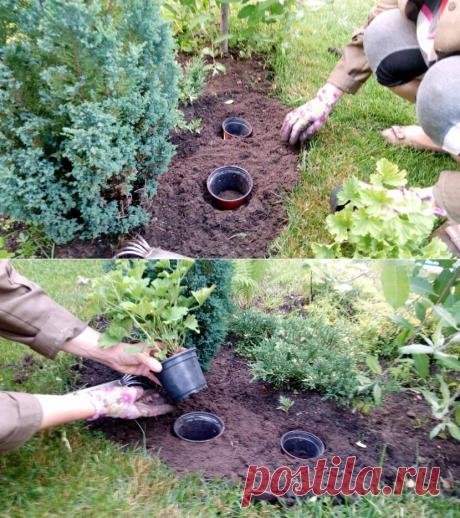 Посадка «горшок в горшок». О таком методе раньше не знала, показал профессиональный садовод | Собираем урожай | Яндекс Дзен