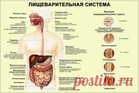 Time of digestion of food
