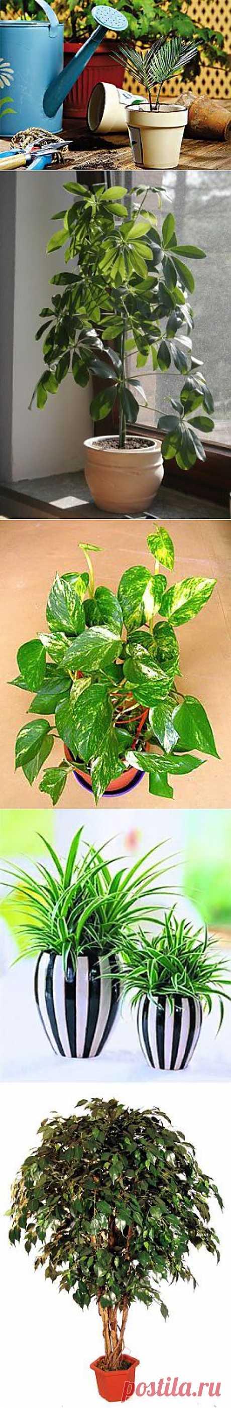 Очищаем воздух с помощью растений / Домоседы