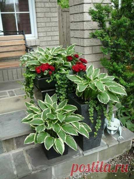 Красивые сочетания растений - Своими руками! - медиаплатформа МирТесен