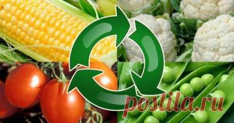 Севооборот, или Что после чего сажать в огороде Полезная информация для тех, кто хочет каждый год собирать хороший урожай овощей и зелени.