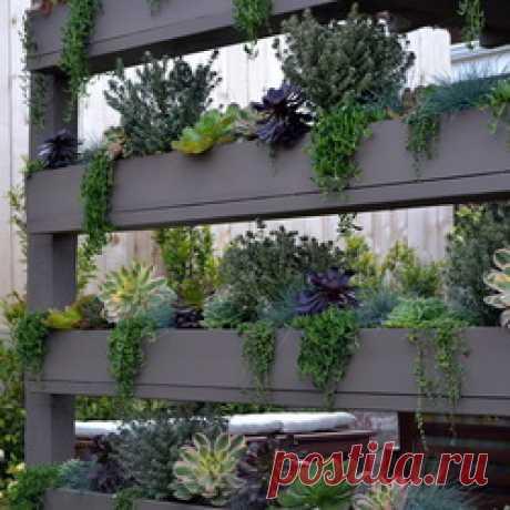 El jardín — la foto, la formalización, la idea, el diseño de paisaje del jardín por las manos