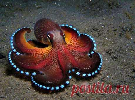 Картинки про осьминога (35 фото) ⭐ Забавник