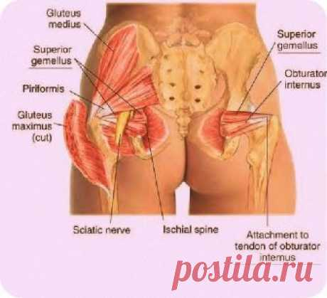 Super exercise for the tightened buttocks and improvement of urinogenital system.