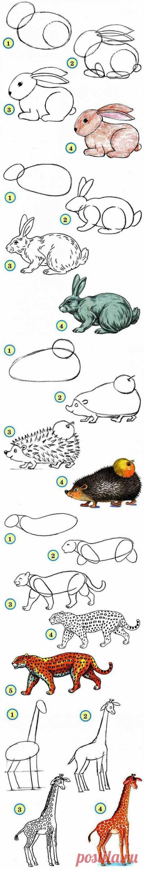 Рисуем животных..