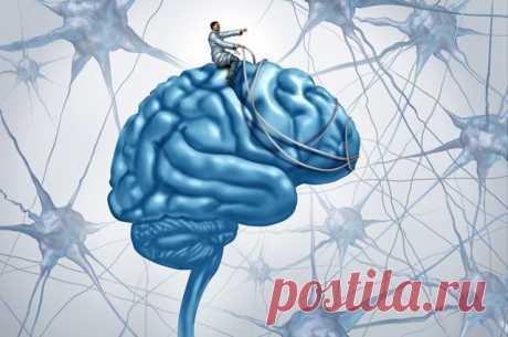 Силой мысли. Ученый о «расширении» мозга и секретах «суперпамяти» О тайнах мозга размышляет ростовский профессор Валерий Кирой.