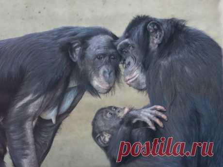 12 животных, которым есть что рассказать людям о любви и страсти