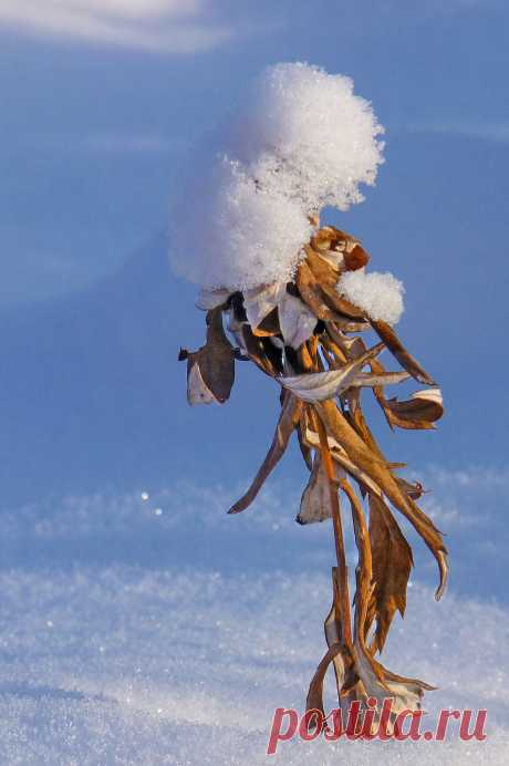 Женщина вамп.Фото зимой,сухая трава покрытая снегом.