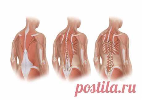 Лучшие упражнения для глубоких мышц спины