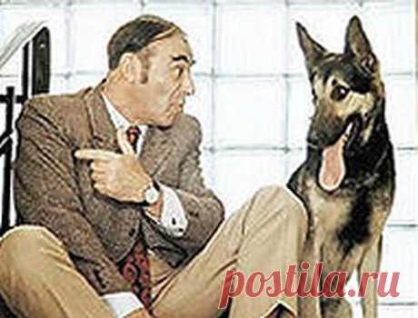 Поговорим с собакой » ZooTovar.ru - Интернет-издание о животных, домашние питомцы