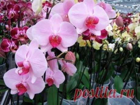 Всё о комнатных растениях и цветах - Part 2