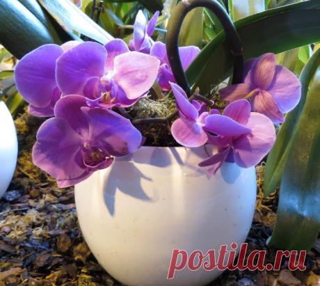 Когда и какими удобрениями нужно подкармливать орхидеи?   Твоя Дача   Яндекс Дзен