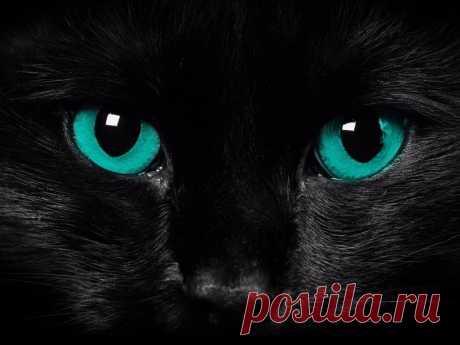 Котик Мотик, Дедовичи, 44 года