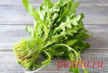 Рукола: особенности выращивания, которые нужно знать  Руккола (на латыни - Eruca sativa) относится к семейству капустных, одно- или двухлетнее растение, имеет также другие названия: рокет-салат, индау, аругула, эрука салатная. Растет до 60-80 см., имеет…