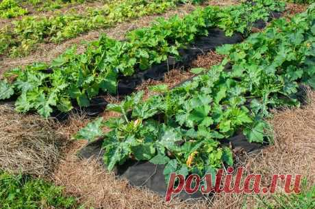 What can be put on one bed nearby: compatibility of beet and cabbage with other vegetables