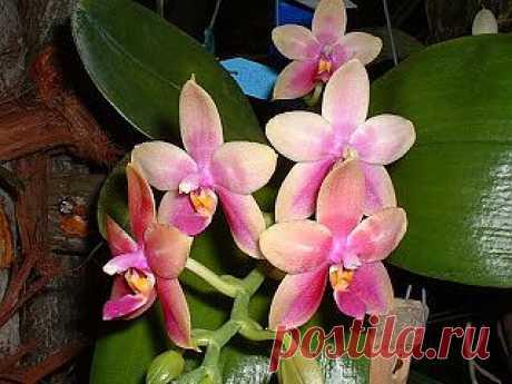 Мои табу по уходу за орхидеями, или что я НИКОГДА НЕ ДЕЛАЮ!