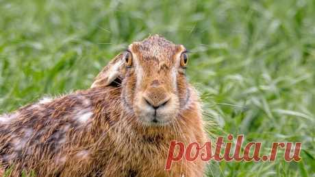 Почему зайца называют косым? (3 фото) . Тут забавно !!!