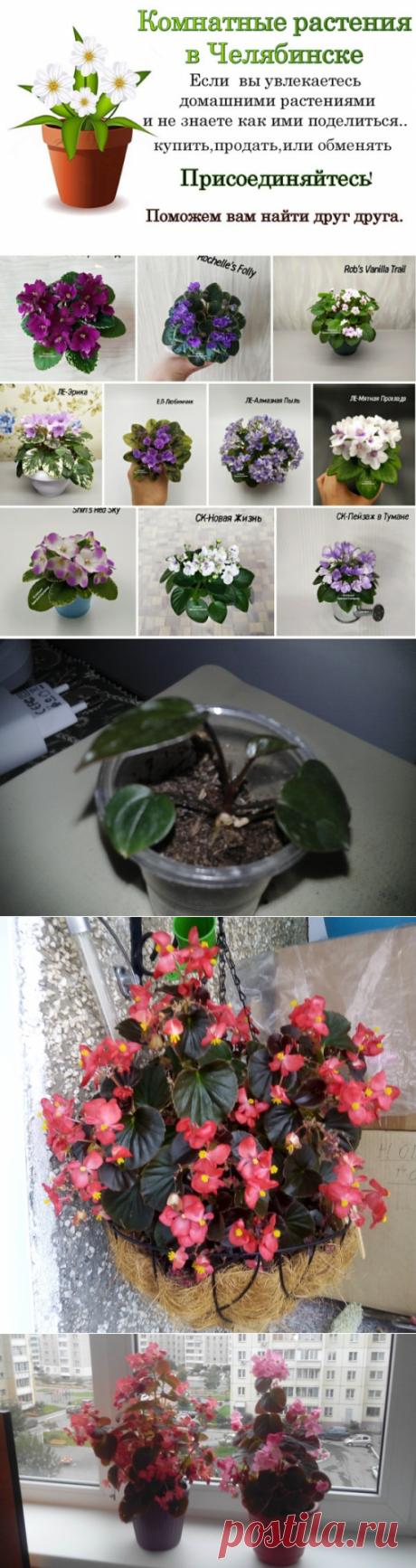 Комнатные растения и цветы.Челябинск