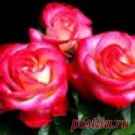 Любовь Борисовна Благирева
